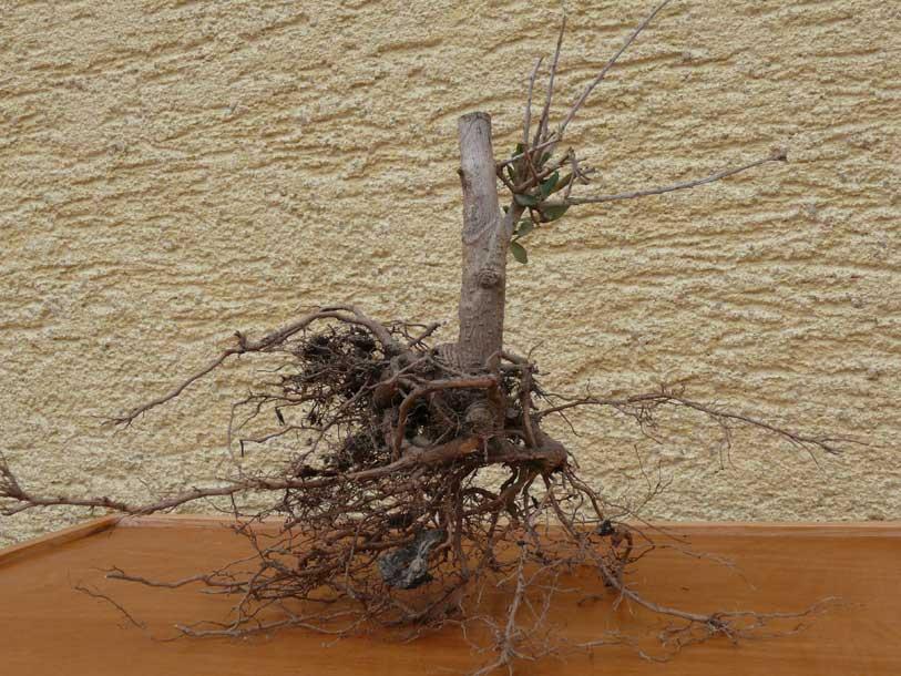 aufbau eines ameisenbaus